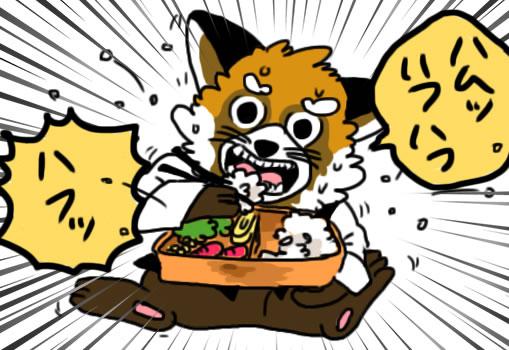 弁当を頑張って食べるレッサー